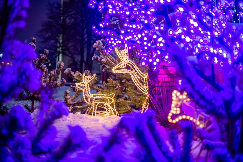 Follow the Lights in Connecticut: Most Epic Light Shows and Displays